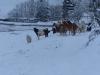 winter-2016-142