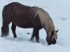 Pferde-Winter 2016