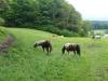 Unsere Pferde im Frühjahr 2014