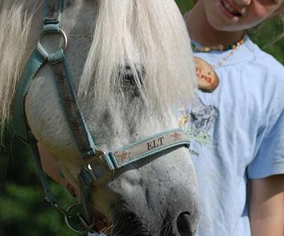 Neues Pferd